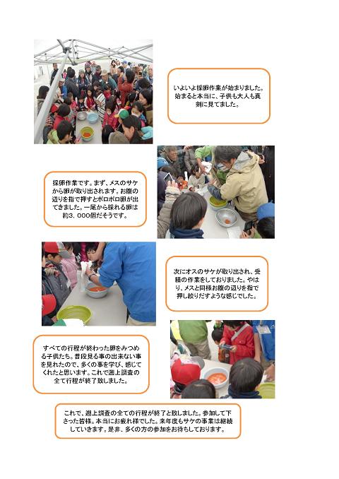 ■サケの遡上調査 報告_ページ_2.png