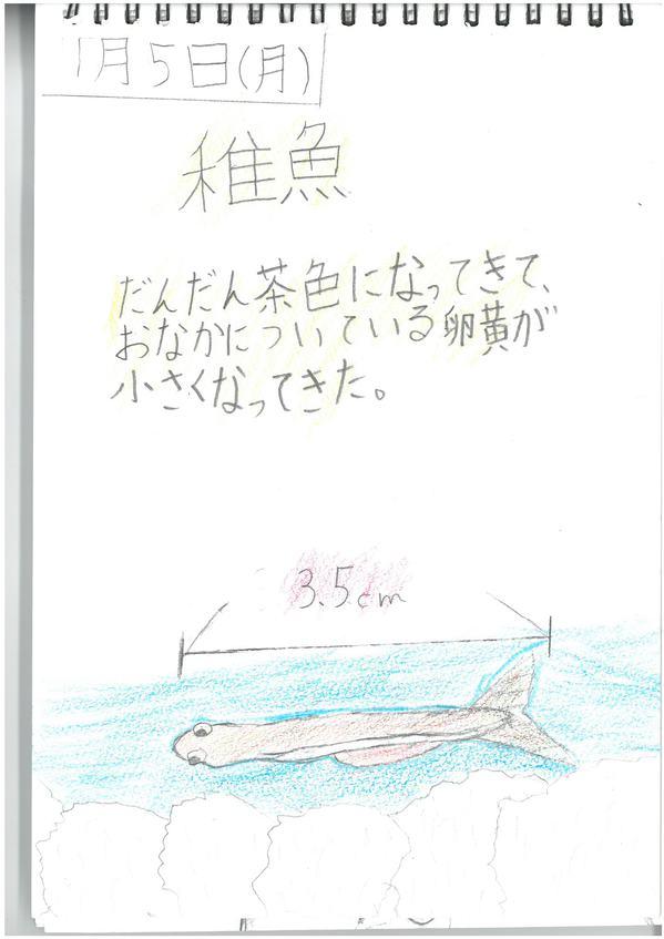 観察日記サンプル.jpg